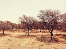 Forest. Trees in the desert Forest Stock Image