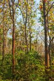 Forest trees early autumn Royalty Free Stock Image