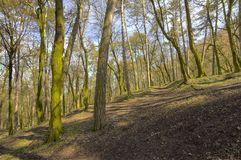 Forest trees in early spring stock image