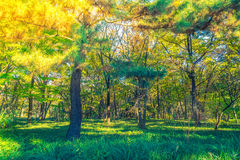 Forest trees  ( Filtered image processed vintage effect. ) Stock Photos