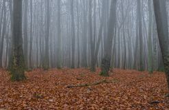 Forest trees in fog on a misty day Stock Photography