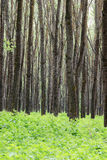 Forest trees and foliage Stock Photo