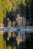 Forest trees on Frillensee (small lake near Eibsee), Germany Royalty Free Stock Image