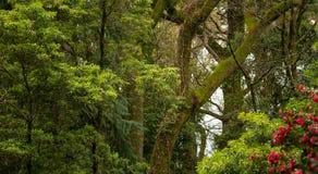 Forest Trees grön bakgrund arkivbild