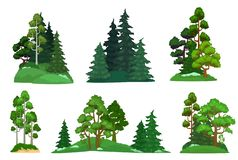 Forest trees. Green fir tree, forests pine composition and isolated trees cartoon vector illustration set