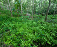 Forest trees green nature backgrounds. Latex rubber stock image