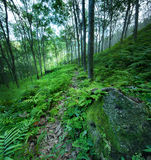 Forest trees green nature backgrounds stock photography