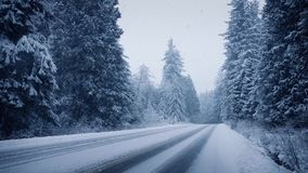 Forest trees in heavy snowfall stock video footage