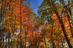 Forest Trees in High Dynamic Range Royalty Free Stock Photography