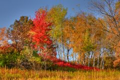Forest Trees in High Dynamic Range Royalty Free Stock Photos