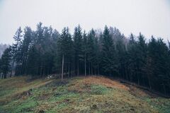 Forest Trees on Hillside Royalty Free Stock Photography