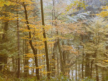 Free Forest Trees In Autumn Leaf Royalty Free Stock Photo - 1592705