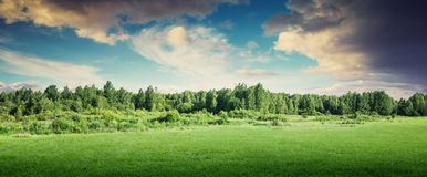 Forest trees landscape panoramic. Nature meadow summer stock photo