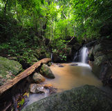 Forest trees landscape with tropical plants, wild mountain river Stock Image