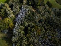 Forest Trees Late Afternoon aéreo, viejo imágenes de archivo libres de regalías