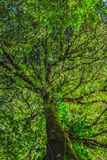 Forest trees leaves Stock Image