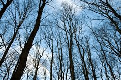 Forest trees without leaves Stock Photos
