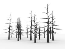Forest with trees without leaves Royalty Free Stock Image