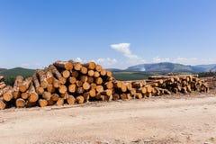Forest Trees Logs Mountains photos libres de droits