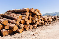 Forest Trees Logs Mountains photographie stock