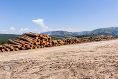 Forest Trees Logs Mountains photographie stock libre de droits