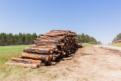 Forest Trees Logs Stack photo libre de droits