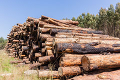 Forest Trees Logs Stack image stock