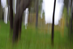 Forest trees motion blur Royalty Free Stock Photos
