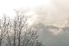 Forest trees with mountain backdrop. Winter landscape views of mountain through trees. Spruce hill forest in fog at sunrise. royalty free stock photography