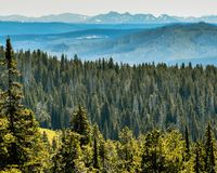 Forest Trees with Mountain Background royalty free stock images