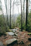Forest trees mountain fir tree spruce stones path trod stock photos
