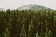 Forest trees in mountains Stock Photos