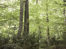 Forest with trees Royalty Free Stock Photos