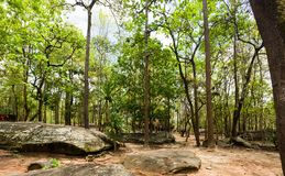 Forest of trees in the national park. Forest of trees in Phu Phra Bat Historical Park, The Phu Phra Bat is a historical park in Ban Phue District, Udon Thani stock photos