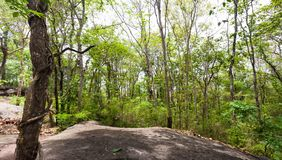 Forest of trees in the national park. Forest of trees in Phu Phra Bat Historical Park, The Phu Phra Bat is a historical park in Ban Phue District, Udon Thani stock images