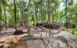 Forest of trees in the national park. Forest of trees in Phu Phra Bat Historical Park, The Phu Phra Bat is a historical park in Ban Phue District, Udon Thani royalty free stock image