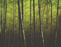 Forest Trees Nature Concept de bambú Fotografía de archivo libre de regalías