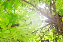 Forest trees, nature green leaf sunlight background Royalty Free Stock Image