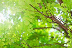 Forest trees, nature green leaf sunlight background Stock Photo