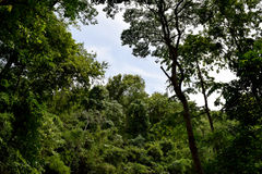 Forest trees. nature green in Phayao,Thailand Stock Photography