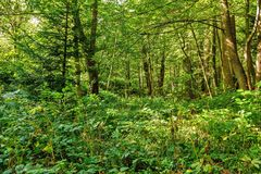 Forest trees. nature green wood backgrounds Sunny Day Stock Photography