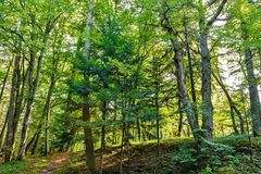 Forest trees. nature green wood backgrounds Sunny Day Royalty Free Stock Photos