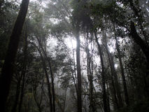 Forest trees, nature green wood doi inthanon national park, chai Royalty Free Stock Photo