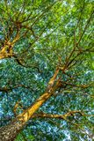 Forest trees. nature green wood sunlight backgrounds royalty free stock photo