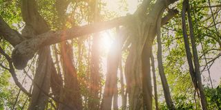 forest trees. nature green wood sunlight backgrounds stock images