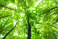 Forest trees. Nature green wood sunlight backgrounds Royalty Free Stock Images