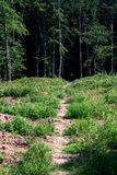 Forest trees Royalty Free Stock Photo