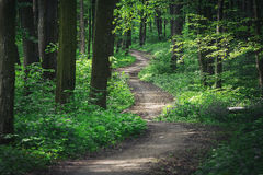 Forest. Trees nature green wood sunlight backgrounds Stock Photos