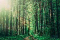 Forest trees. nature green wood sunlight backgrounds. sky Stock Photos