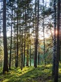 Forest trees nature green wood sunlight view. Royalty Free Stock Photos
